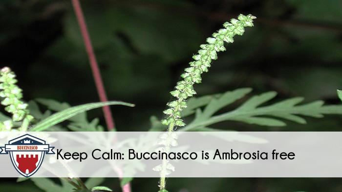 Ambrosia Buccinasco